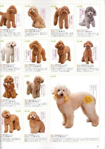 Poodle Grooming Styles
