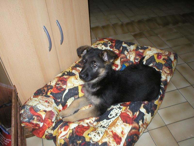 nos chiens chez des colombophiles P1010014