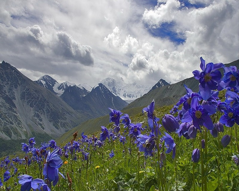 SHILAJIT. Un tesoro dal passato geologico. Altai_10