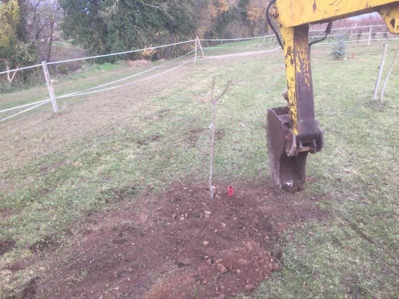 Plantation d'arbre fruitier  2015-134