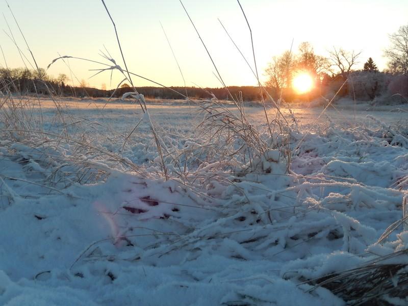 Quelques photos bien hivernales ............ Image21