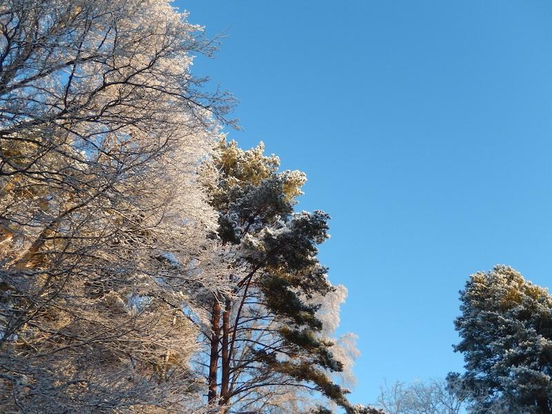 Quelques photos bien hivernales ............ Image25
