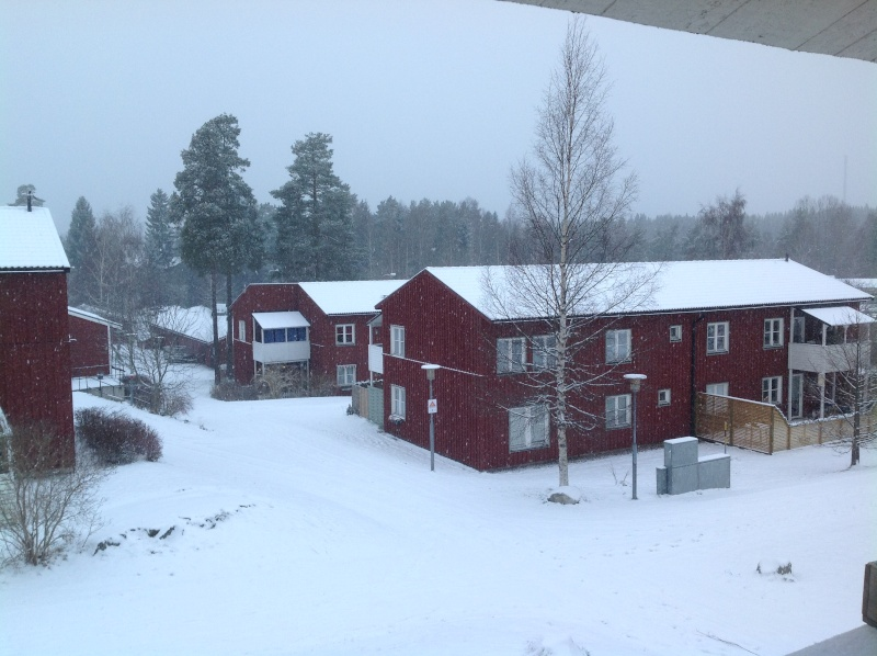 Quelques photos bien hivernales ............ Image33