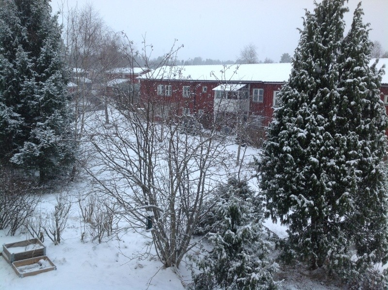 Quelques photos bien hivernales ............ Image35
