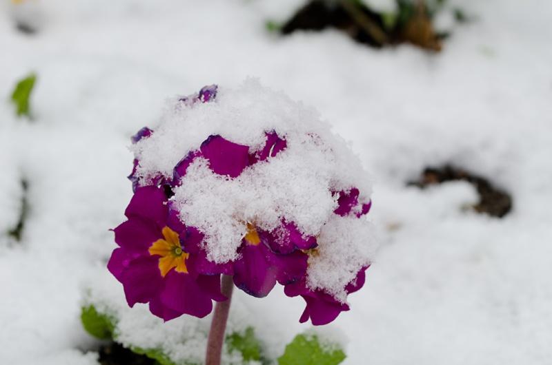 La neige est arrivée en Auvergne  ! _dsc2010