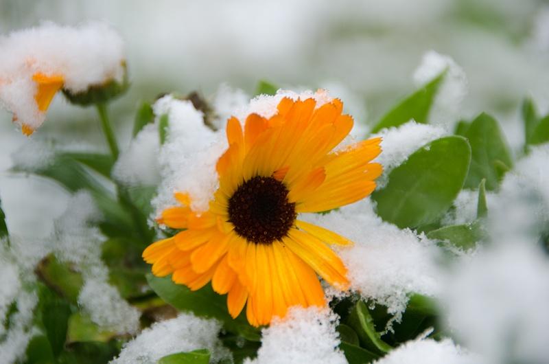 La neige est arrivée en Auvergne  ! _dsc2110