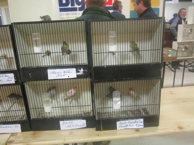 bourses d'oiseaux a flemalle - Page 2 Img_4010