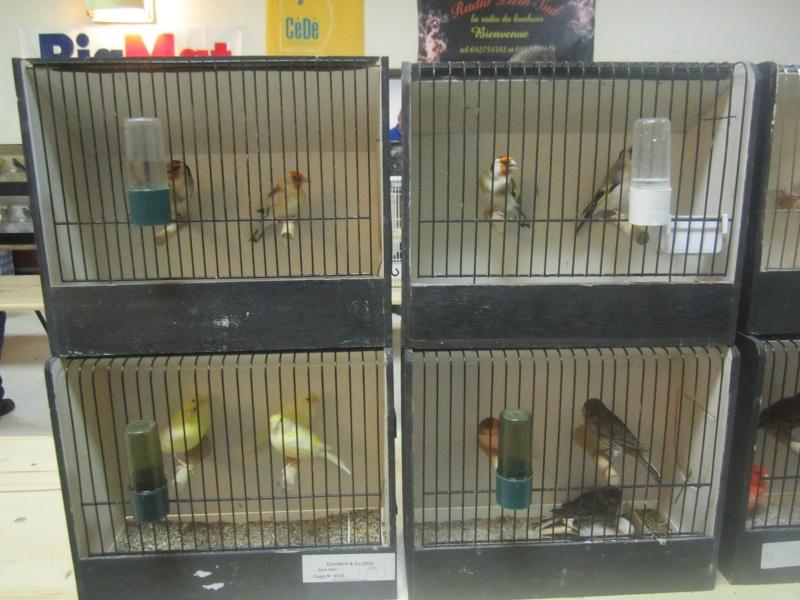 bourses d'oiseaux a flemalle - Page 2 Img_4012