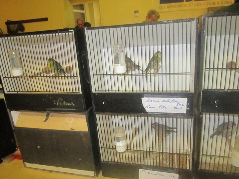 bourses d'oiseaux a flemalle - Page 2 Img_4013