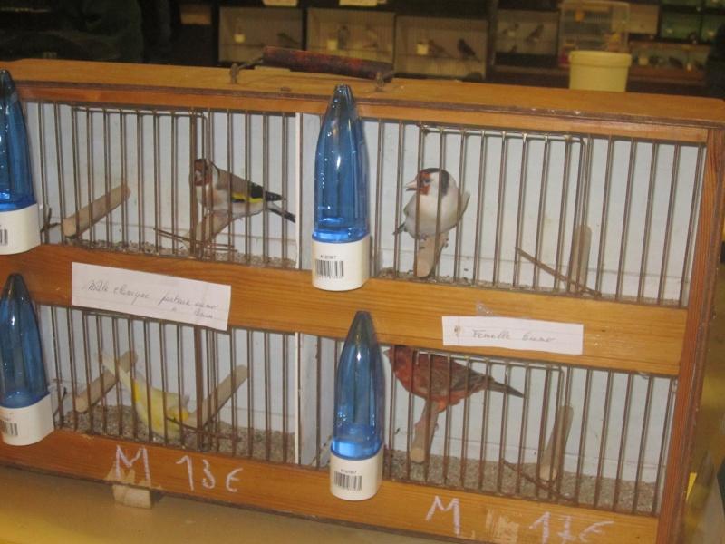 bourses d'oiseaux a flemalle - Page 2 Img_4017