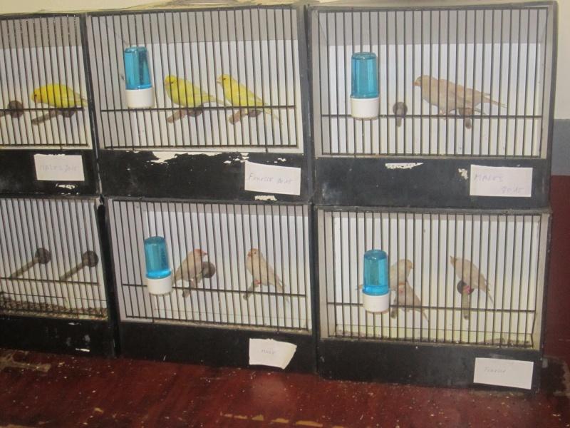 bourses d'oiseaux a flemalle - Page 2 Img_4018