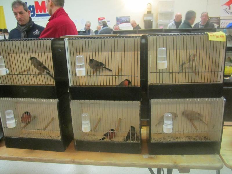 bourses d'oiseaux a flemalle - Page 2 Img_4020