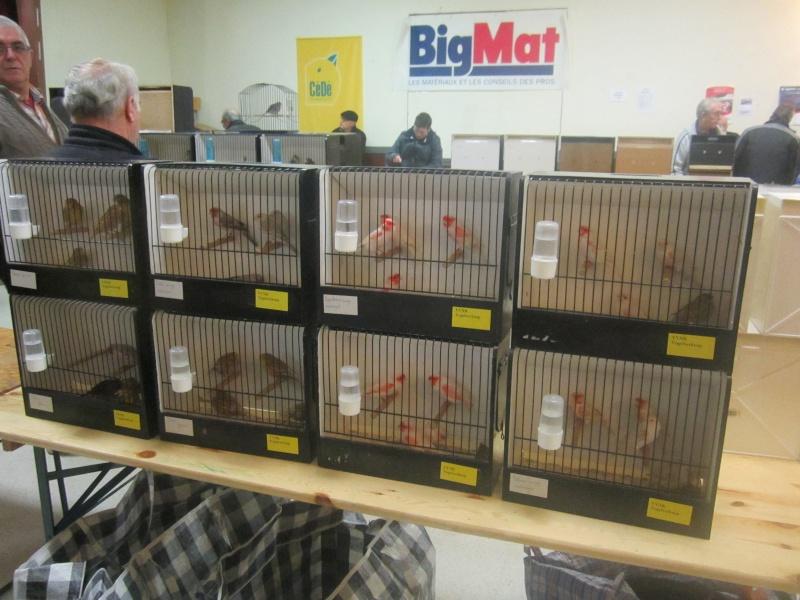 bourses d'oiseaux a flemalle - Page 2 Img_4021