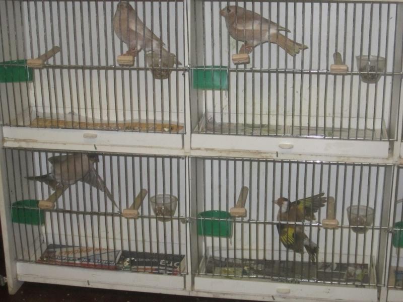 bourses d'oiseaux a flemalle - Page 2 Img_4023