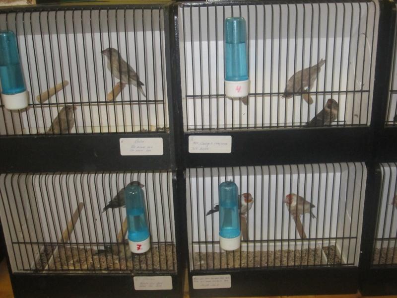bourses d'oiseaux a flemalle - Page 2 Img_4024