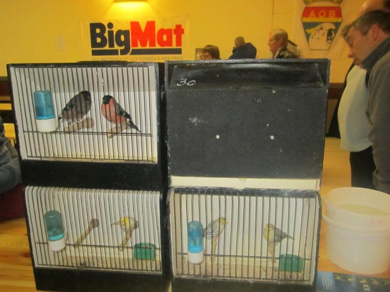 bourses d'oiseaux a flemalle - Page 2 Img_4366