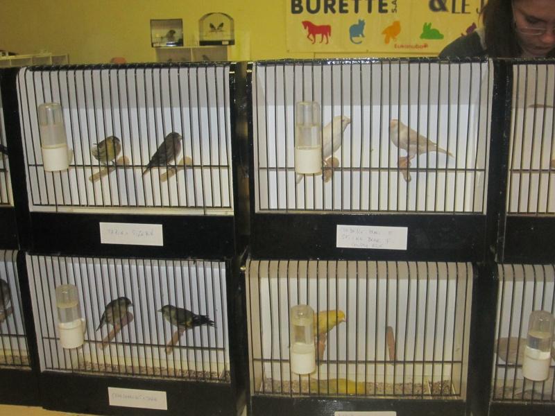 bourses d'oiseaux a flemalle - Page 2 Img_4369