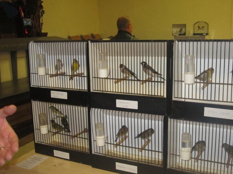 bourses d'oiseaux a flemalle - Page 2 Img_4370
