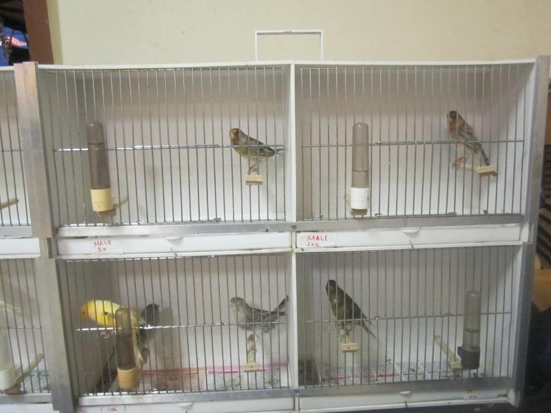 bourses d'oiseaux a flemalle - Page 2 Img_4374
