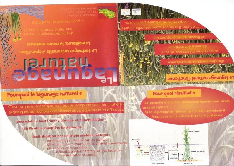 Filtration de l'eau par les plantes Laguna10