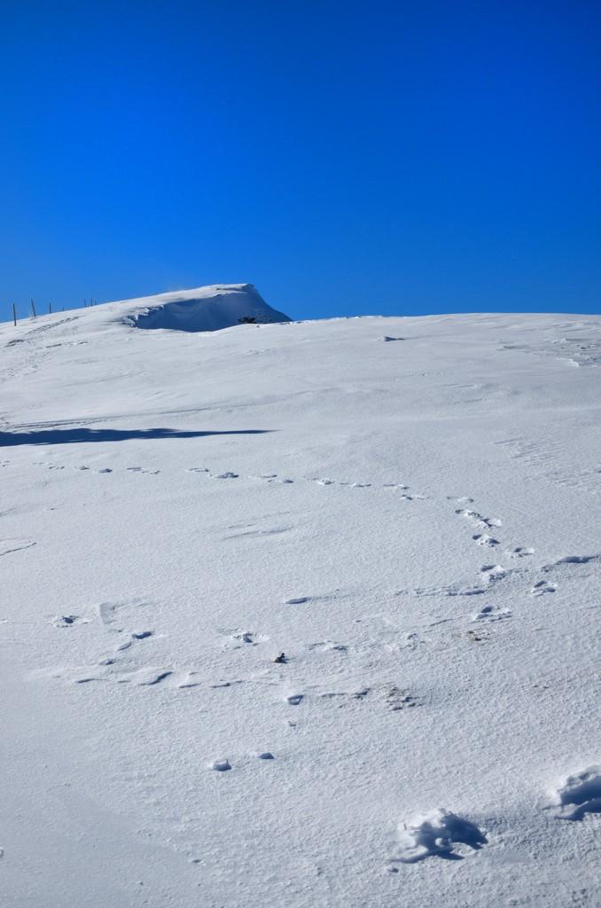 Un peu de neige Dsc_0111