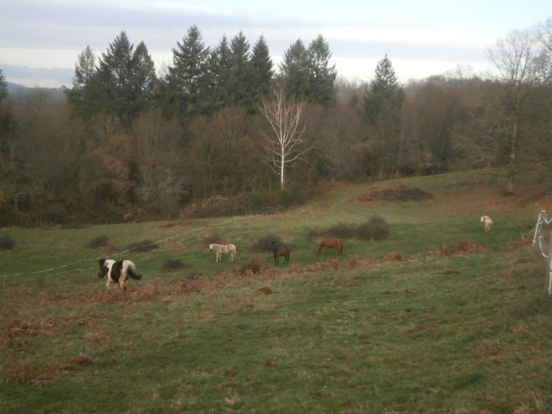 CANNELLE - ONC poney née en 2009 - adoptée en décembre 2013 par Catie - Page 3 P1170010