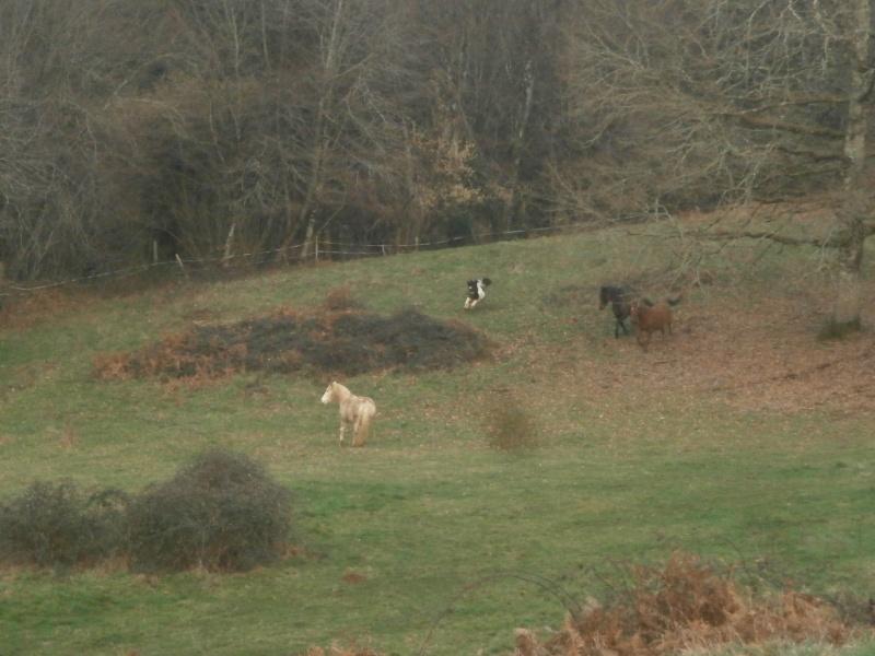 CANNELLE - ONC poney née en 2009 - adoptée en décembre 2013 par Catie - Page 3 P1170011