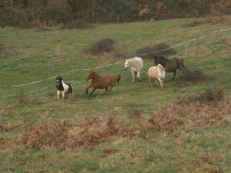 CANNELLE - ONC poney née en 2009 - adoptée en décembre 2013 par Catie - Page 3 P1170012