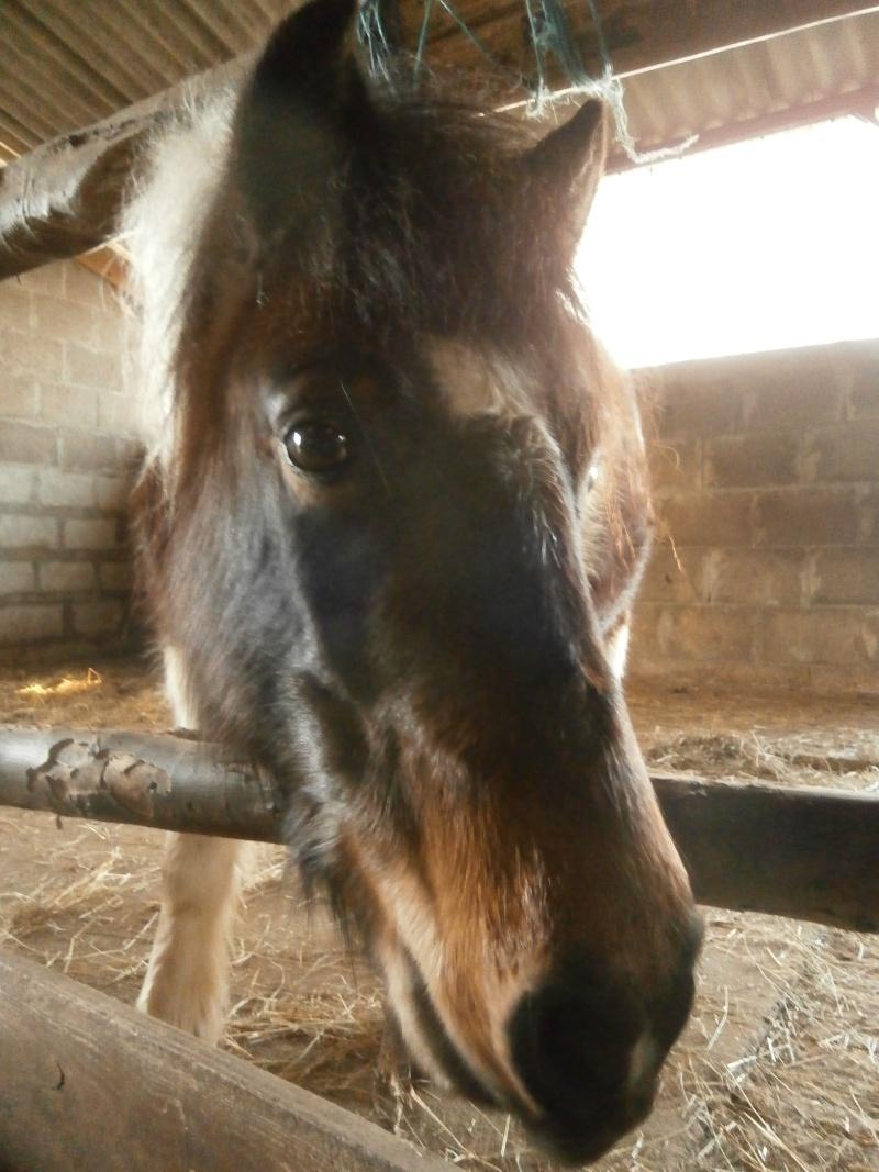 CANNELLE - ONC poney née en 2009 - adoptée en décembre 2013 par Catie - Page 3 Pc020010