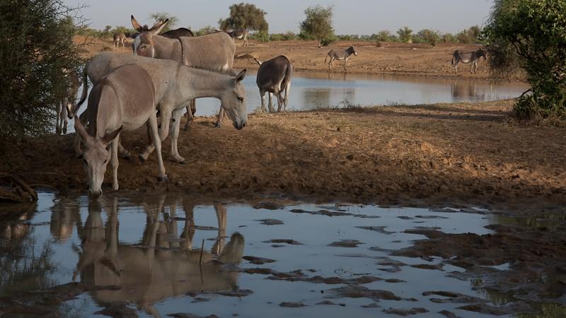 6- Des nouvelles depuis Bamako (1ere partie) Anes-011