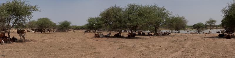 6- Des nouvelles depuis Bamako (1ere partie) Piste_13