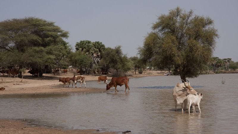 6- Des nouvelles depuis Bamako (1ere partie) Piste_17