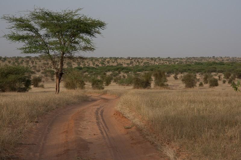 6- Des nouvelles depuis Bamako (1ere partie) Piste_20