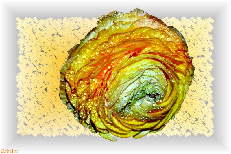 Une fleur qui a chaud 3410