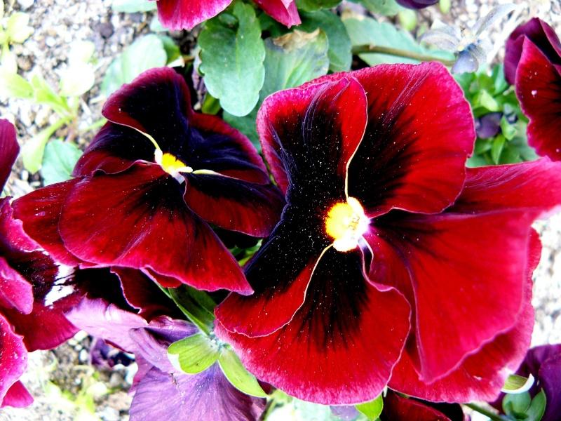 2 petites fleurs P1030710