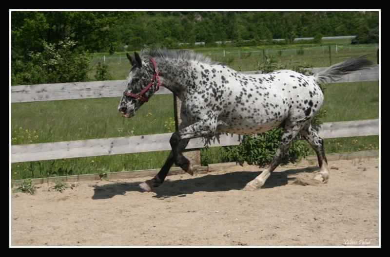 Mes photos de chevaux... - Page 4 Stone_37