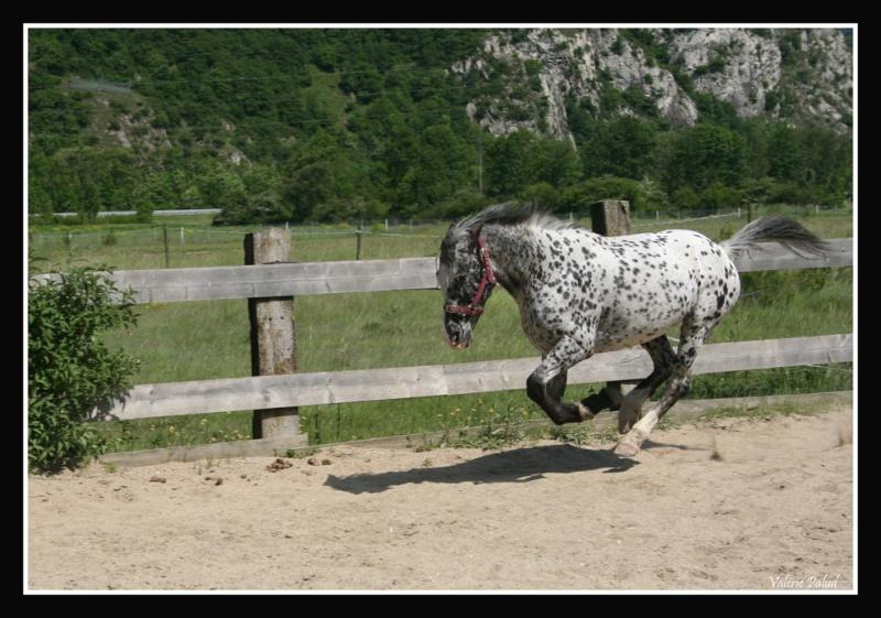 Mes photos de chevaux... - Page 4 Stone_38