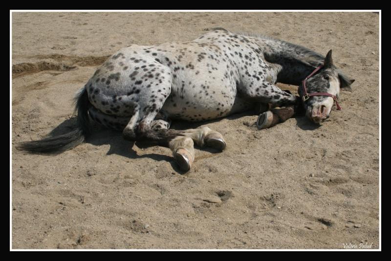 Mes photos de chevaux... - Page 4 Stone_40