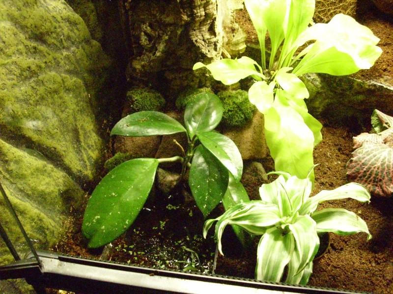 nouveau terra tropical  Img_0227