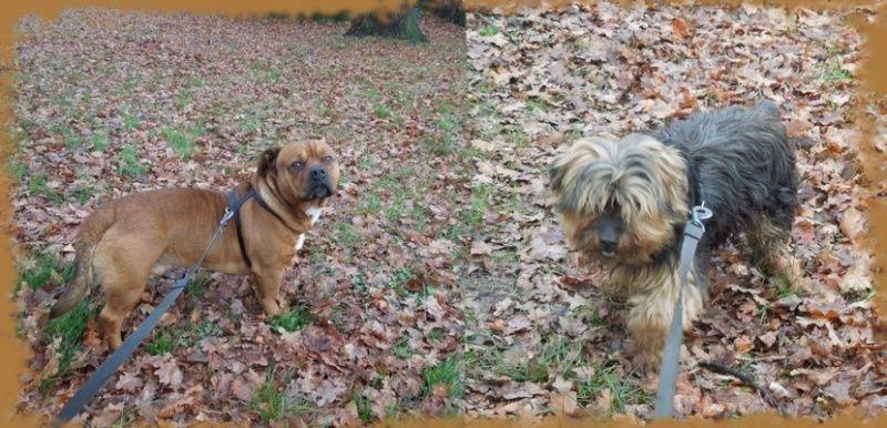 2 chiens trouvés errants non identifiés sur Mitry Mory (77) Trouvy10
