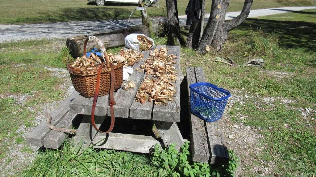 Des champignons entre France et Italie Img_0012