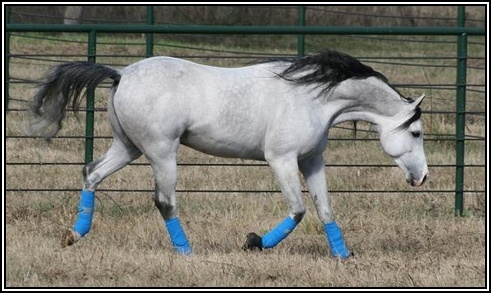 - Activité n°3: Le plus beau cheval. 2elsif10