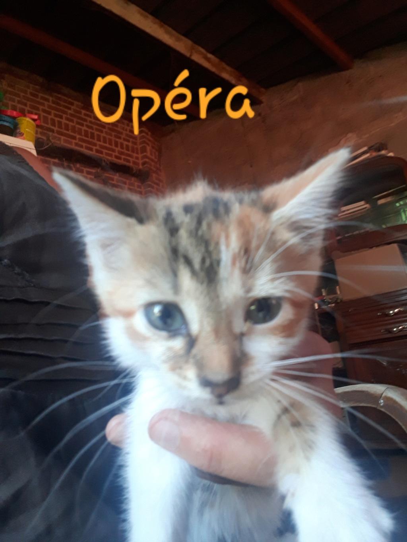 Opéra, née le 13 mai 2018 Opzora10