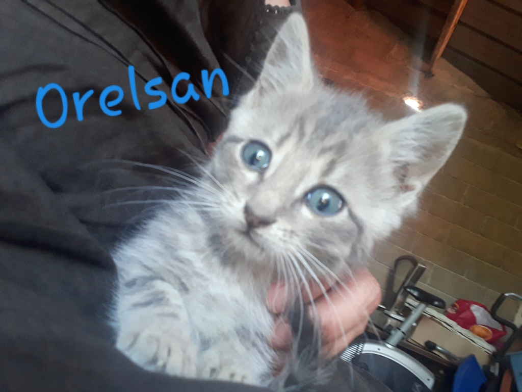 Orelsan, né le 13 mai 2018 Orelsa10