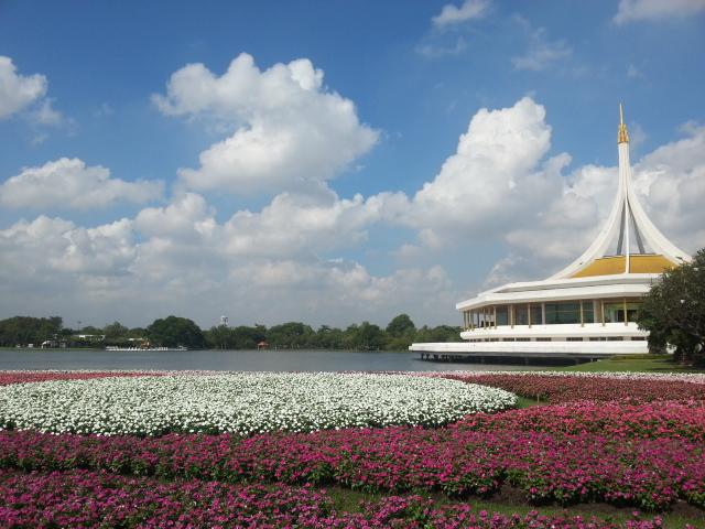 Adenium à Expo Bangkok Suan Luang Rama IX Park 2015 20151210