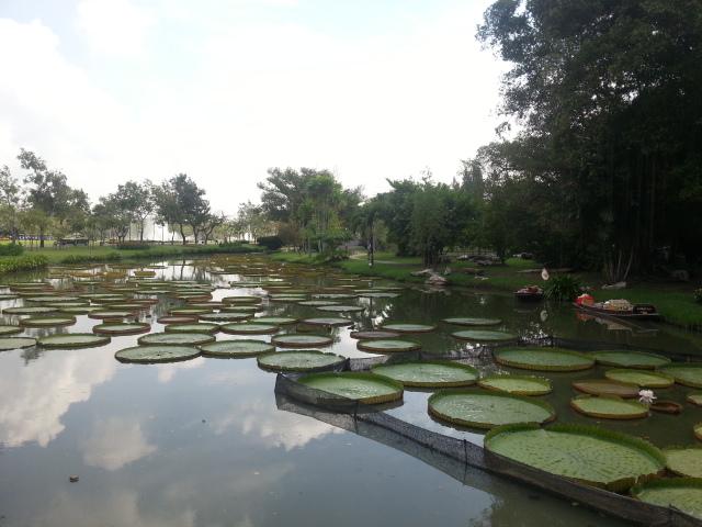 Adenium à Expo Bangkok Suan Luang Rama IX Park 2015 20151212