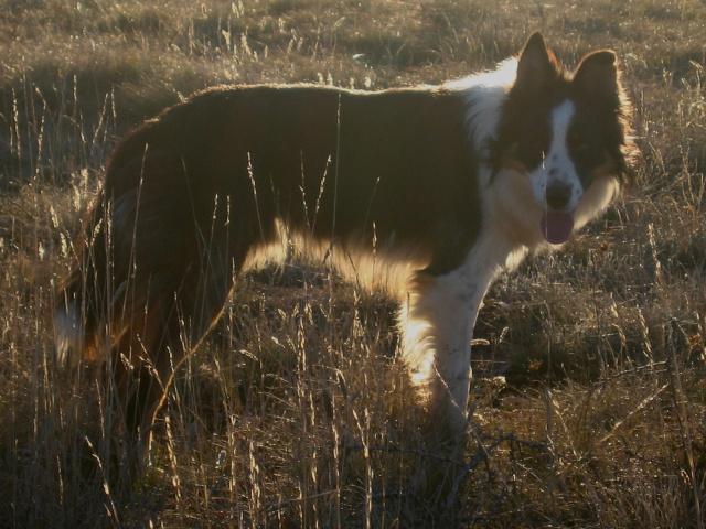 chien - présentation de JUSS, chien traumatisé  Img_9315