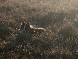chien - présentation de JUSS, chien traumatisé  Img_9319