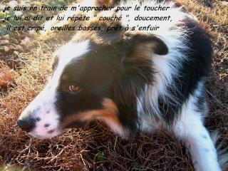 chien - présentation de JUSS, chien traumatisé  Img_9320