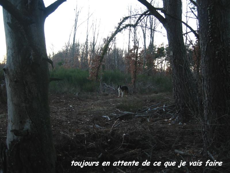 chien - présentation de JUSS, chien traumatisé  Img_9321